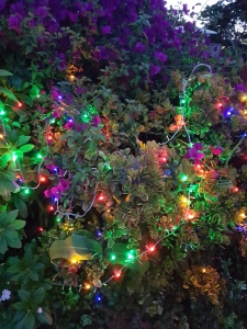 Lights in bushes