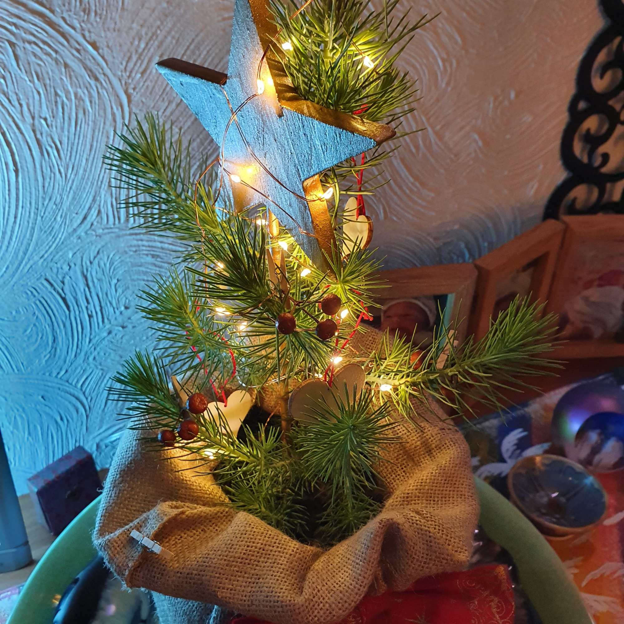 Small growing Christmas tree with small lights; standing in a hessian sack